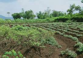Tanah di Desa Padaulun Majalaya Kab Bandung