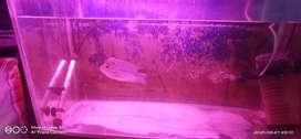 Fish tank 3 feet