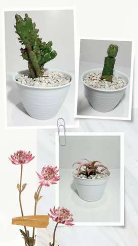 Paket Kaktus Mini