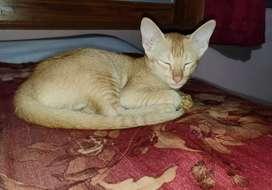 3 month old kitten