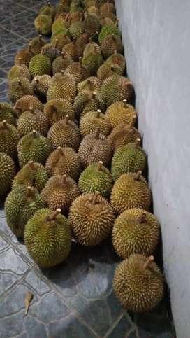 Durian runtuh lho