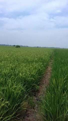 Di Jual Tanah Sawah Daerah Segar Jaya Karawang Barat Jawa Barat