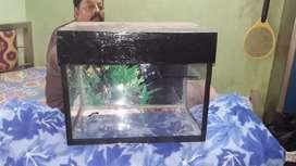 aquarium for pre order and sale