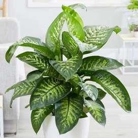 Plants & home decor