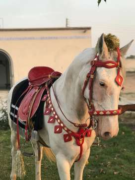 Horse saddle set for sale