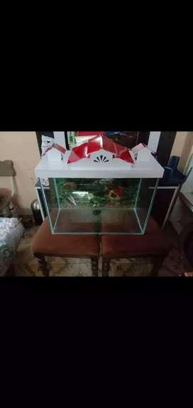 Aquriaum Fish Tank