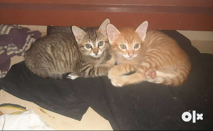 Three Kittens for good homes 0
