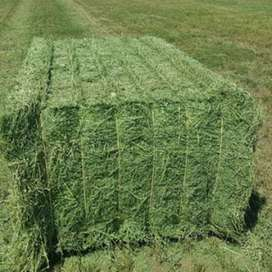 alfala hey  and road grass for sale