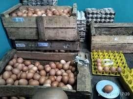 Telur Ayam negeri SEGAR, Lokal langsung dari kandang