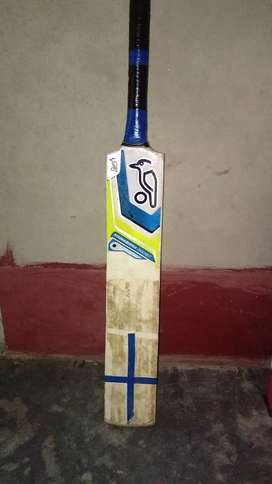 Kookaburra  poplur willow cricket bat