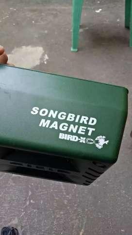 jual audio player buat materan burung merek.  song. brid magnet