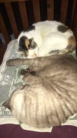 Freelance urus kucing
