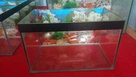 Aquarium baru ukuran 40x24x24