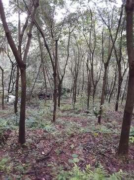 Land for sale vellade, Kannur