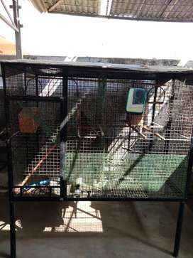 Cage for Dog & Birds purpose