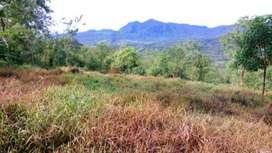 Disewakan Tanah Murah Cocok untuk Lahan Pertanian di Sumatera Utara