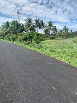 Agriculture land/agricultural land/farm land/farm house/coconut farm
