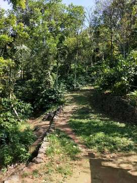 Residential with Agricultural land 1.65 acre near Vagamon Idukki.