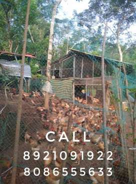 5 Acre rubber and pepper plantation without pattayam