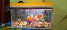 Brand new aquarium
