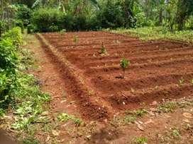 Harga Murah dapat 3025m Tanah ciambar sukabumi