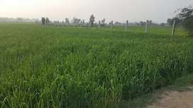 12 kanal Land for Farmhouse close to Main Badian Road Lahore