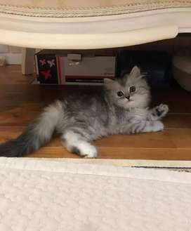 All types of kittens and cats available