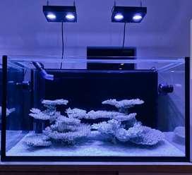 Aquarium customization