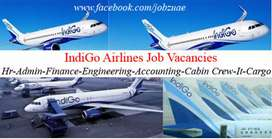 Urgent need for Ground Staff Executive at Amritsar Airport