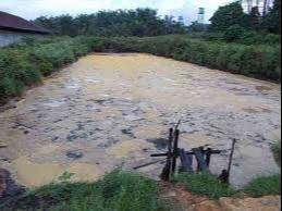 miko limbah pengolahan sawit (pks)