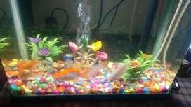 Fish aquwarim