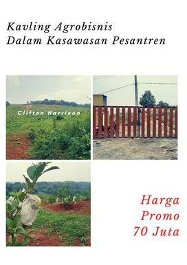 Kavling Agrobisnis Banyak Keunggulan, Dapatkan Harga Promo 70 Jutaan