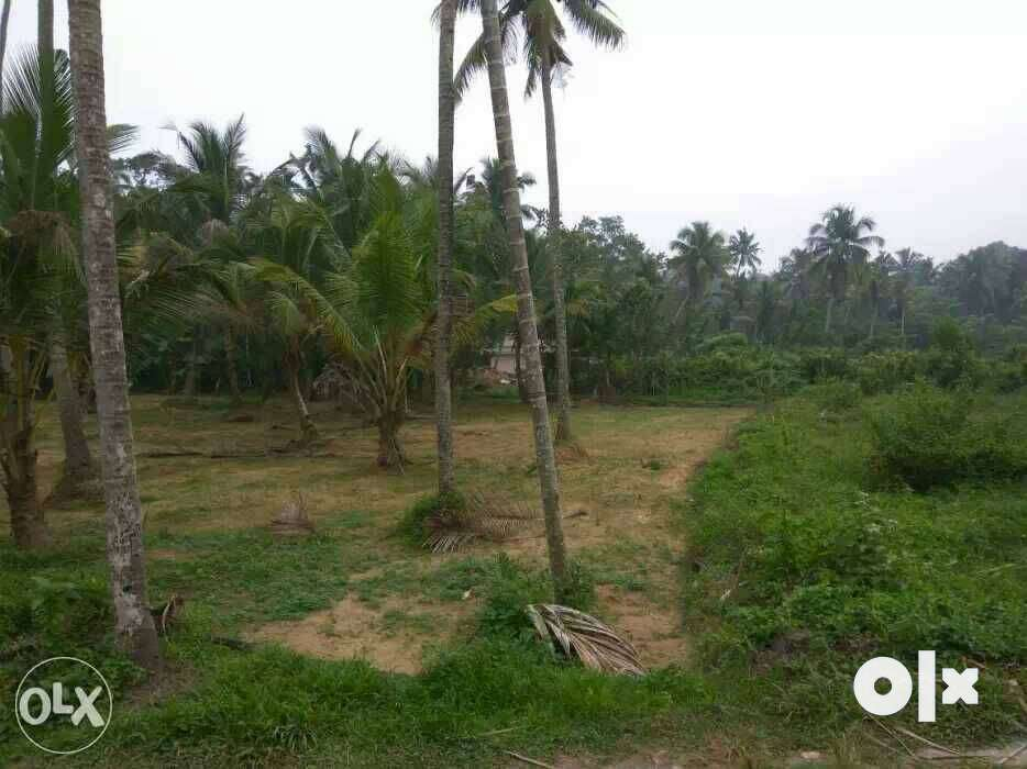 10 cent plot with good frantage rectangle in shape urgent sale .