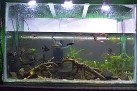 Natural scenery aquarium