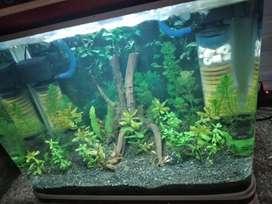 SOBO aquarium