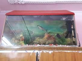 3 fit aquirium with fishes