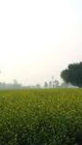 160 Acors Agricultural Land Kasoor