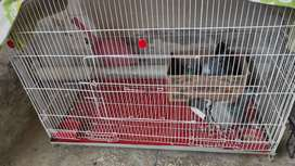 Pigeons and white cage for sale 7000
