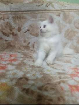 All types kittens available playful and healthy..