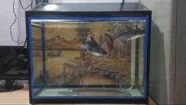 Fish aquarium at sale best choice
