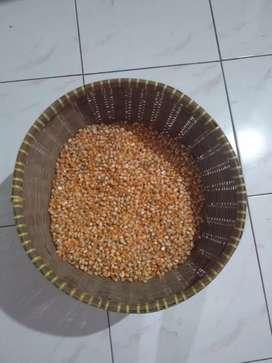 jagung kering berkualitas
