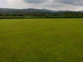 4 Acres of Good Scenic view Agri Land for sale in Sakleshpur Hassan
