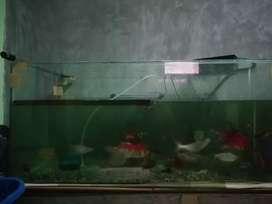 Aquarium ukuran 90x50x50 beserta isinya fullset