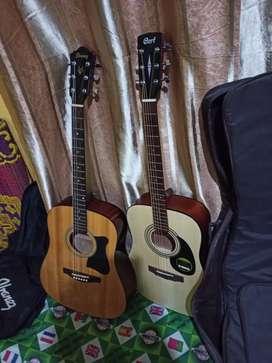 Gitar cort & Ibanez