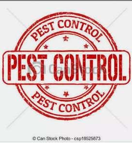 Cockroach bed bugs termite pest control
