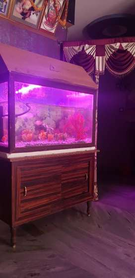 Fish tank sale