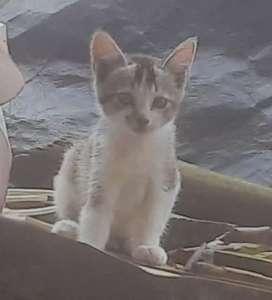KITTENS kittens (free of cost)