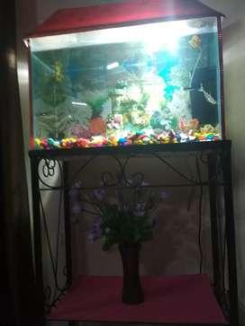 Aquarium 2' × 2'