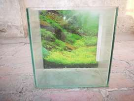 Small  fish tank with gravel