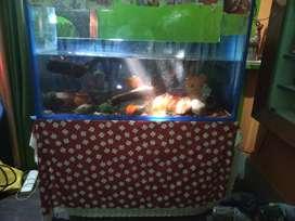 4f aquarium with all equipment
